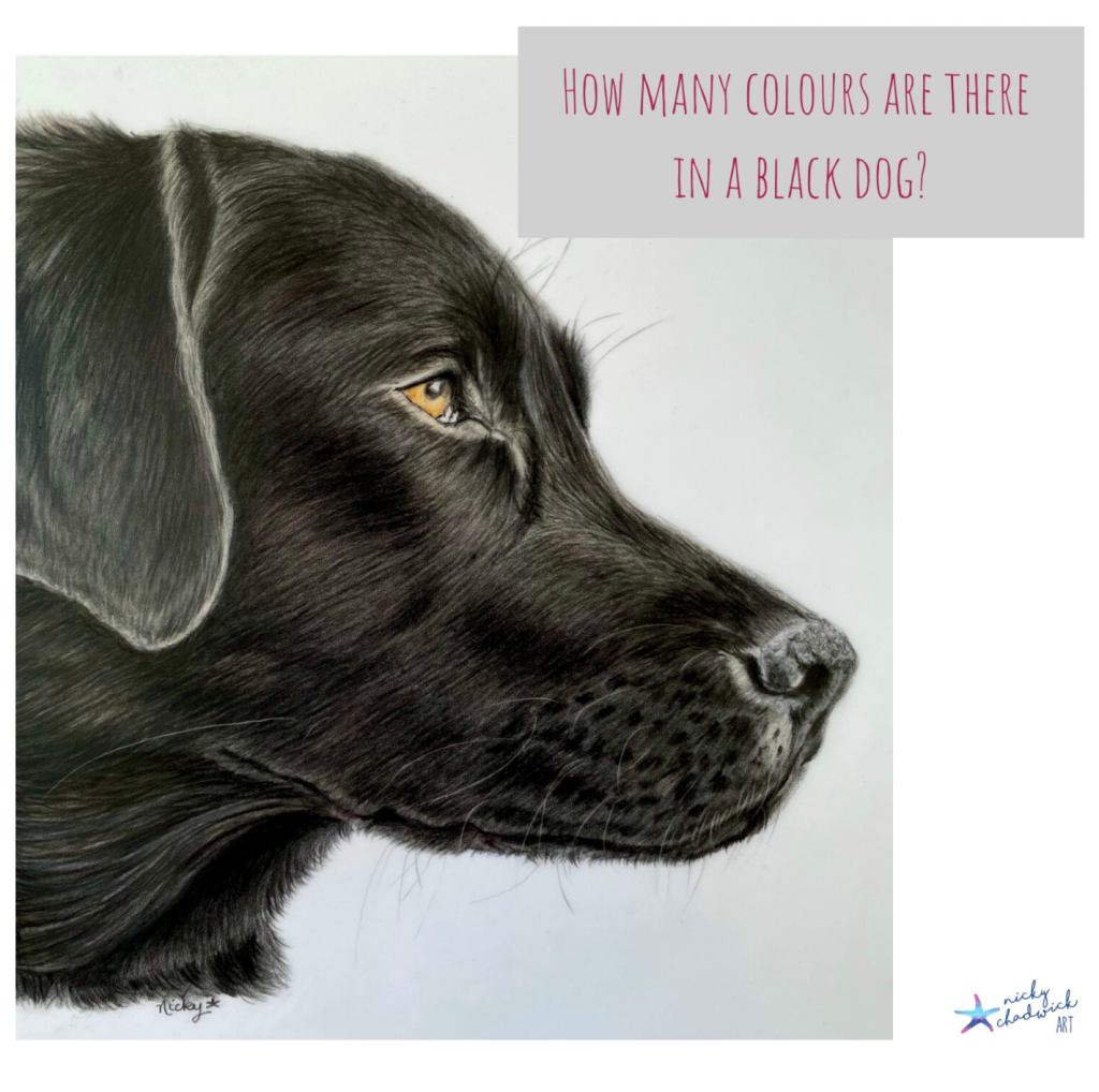 How many colours are in a black dog
