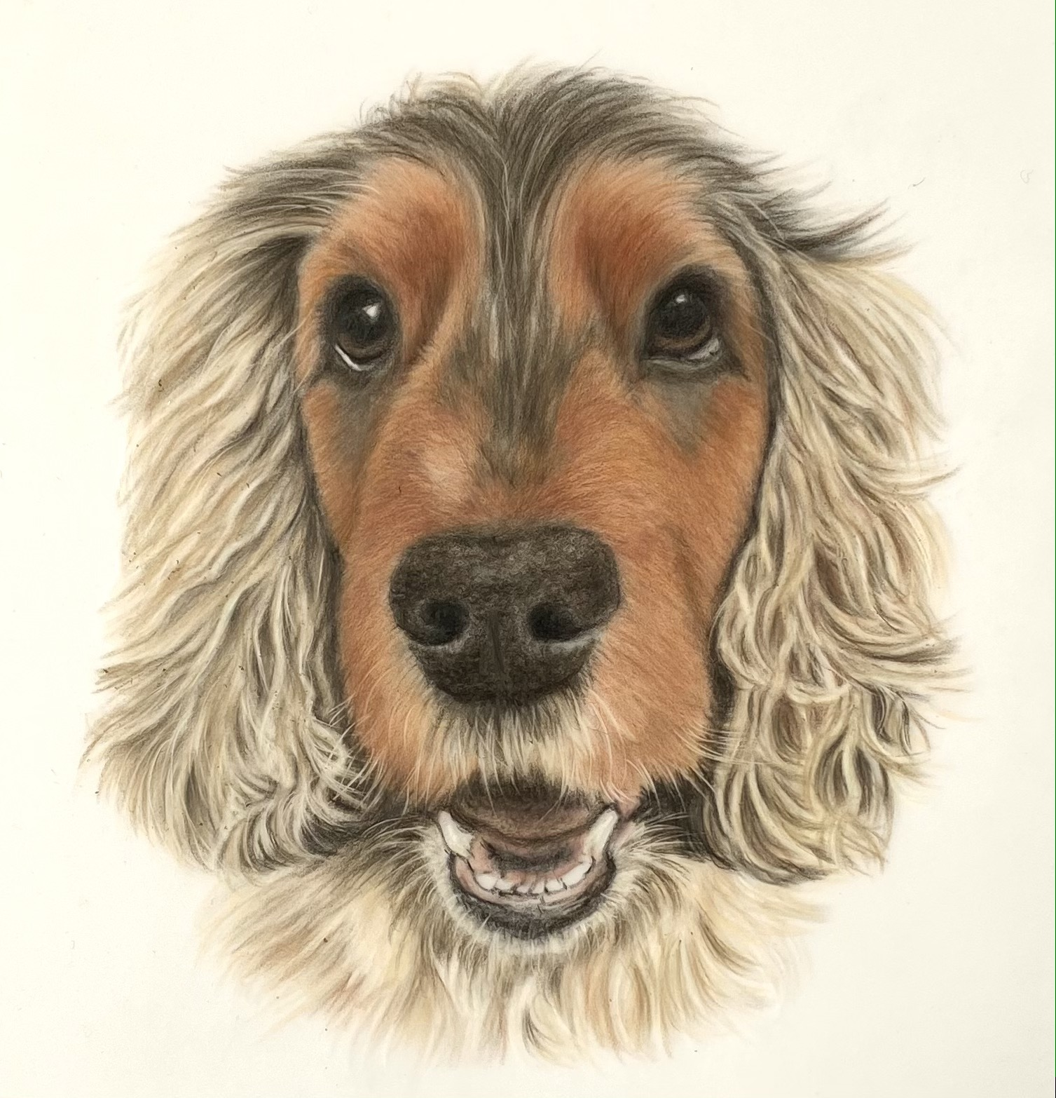 Drawing of spaniel